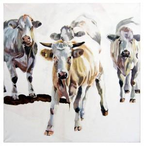 Havlland cows